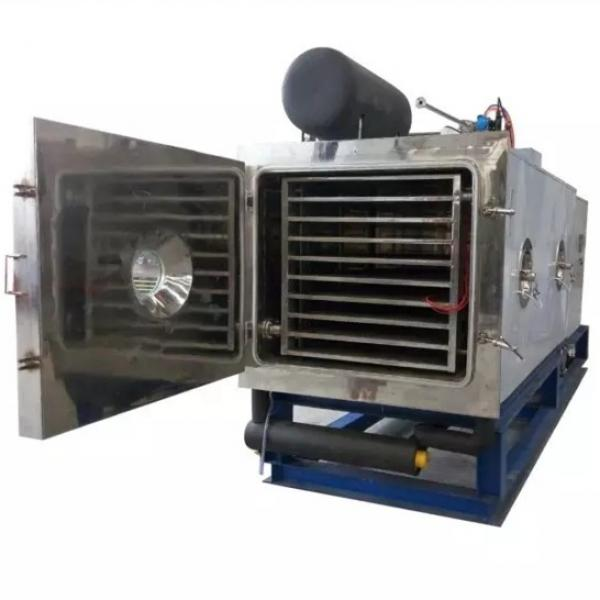 200m² Freeze Drying Pet Food Equipment for Fruit, Vegetable, Meat, Coffee